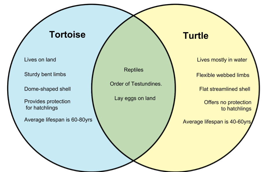 Difference Between Tortoise and Turtle