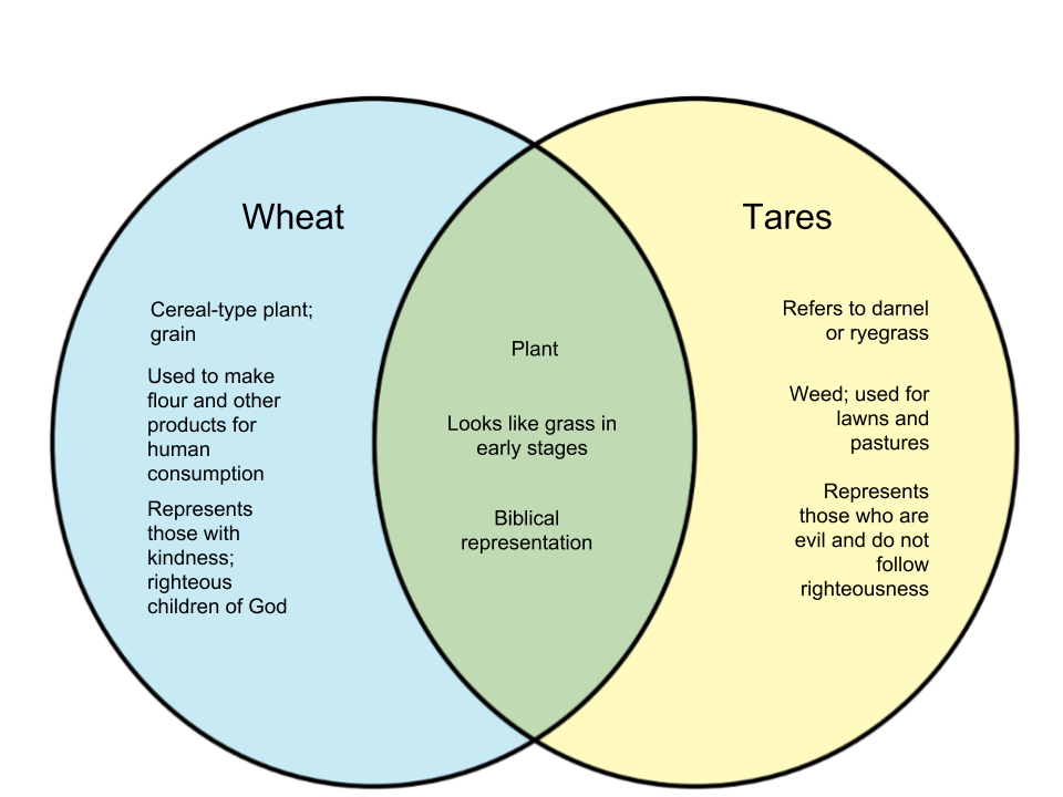 Difference Between Wheat and Tares