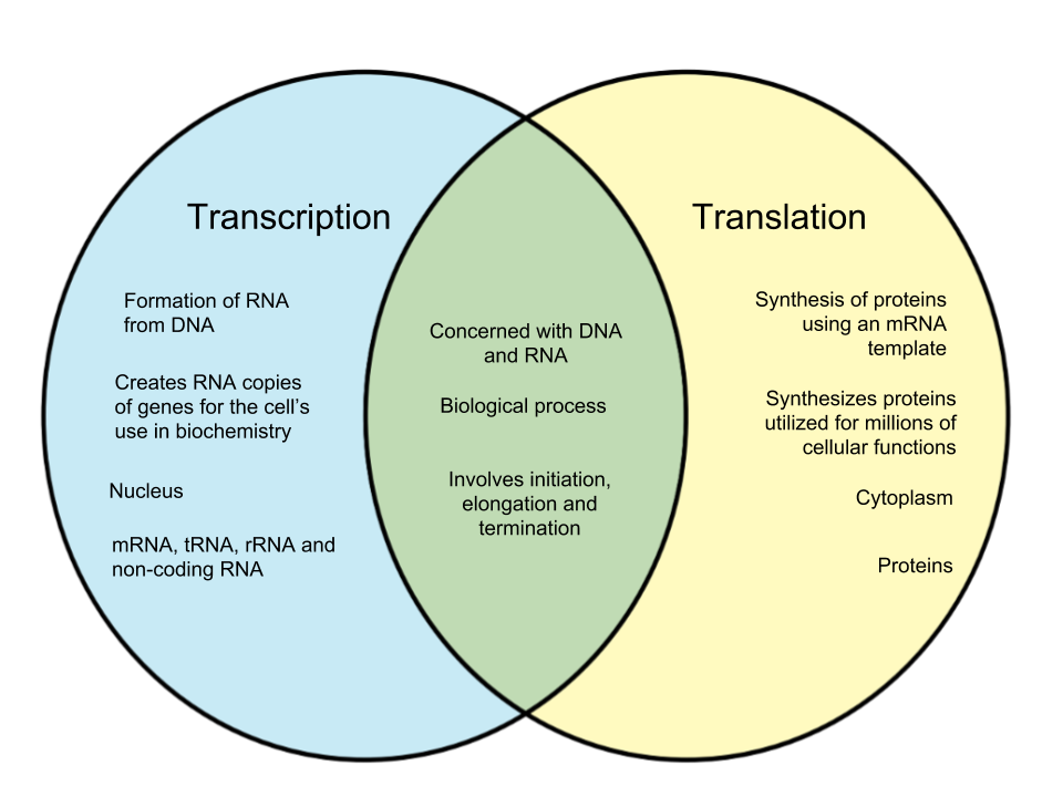 Difference Between Transcription and Translation