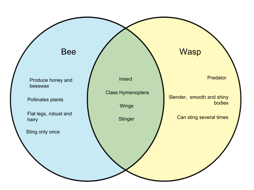 Difference Between Bee and Wasp